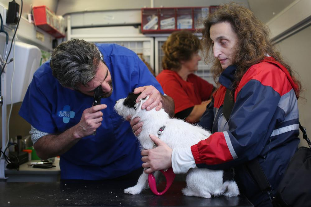 Blue Cross vet examines dog's eye