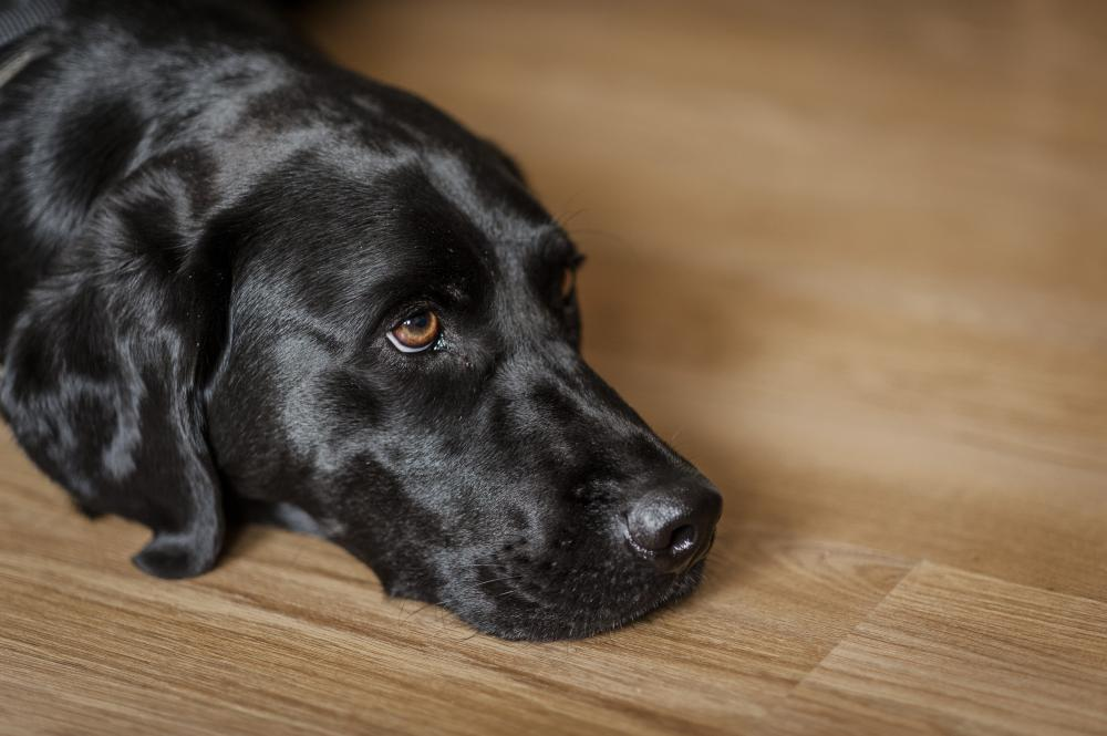Dog myths - looking sad