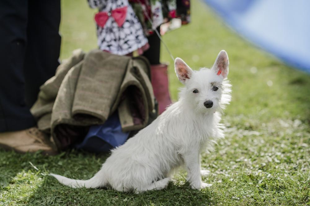 dog myths - terrier
