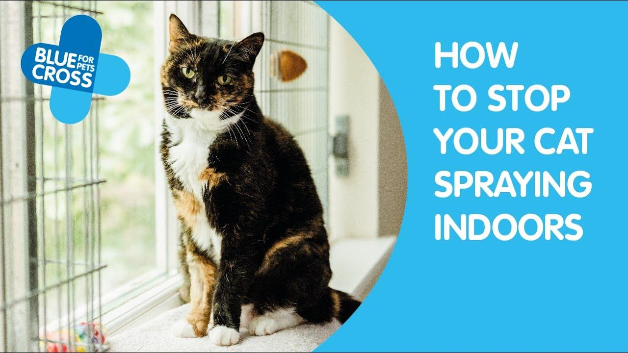 natural deterrent for cats peeing