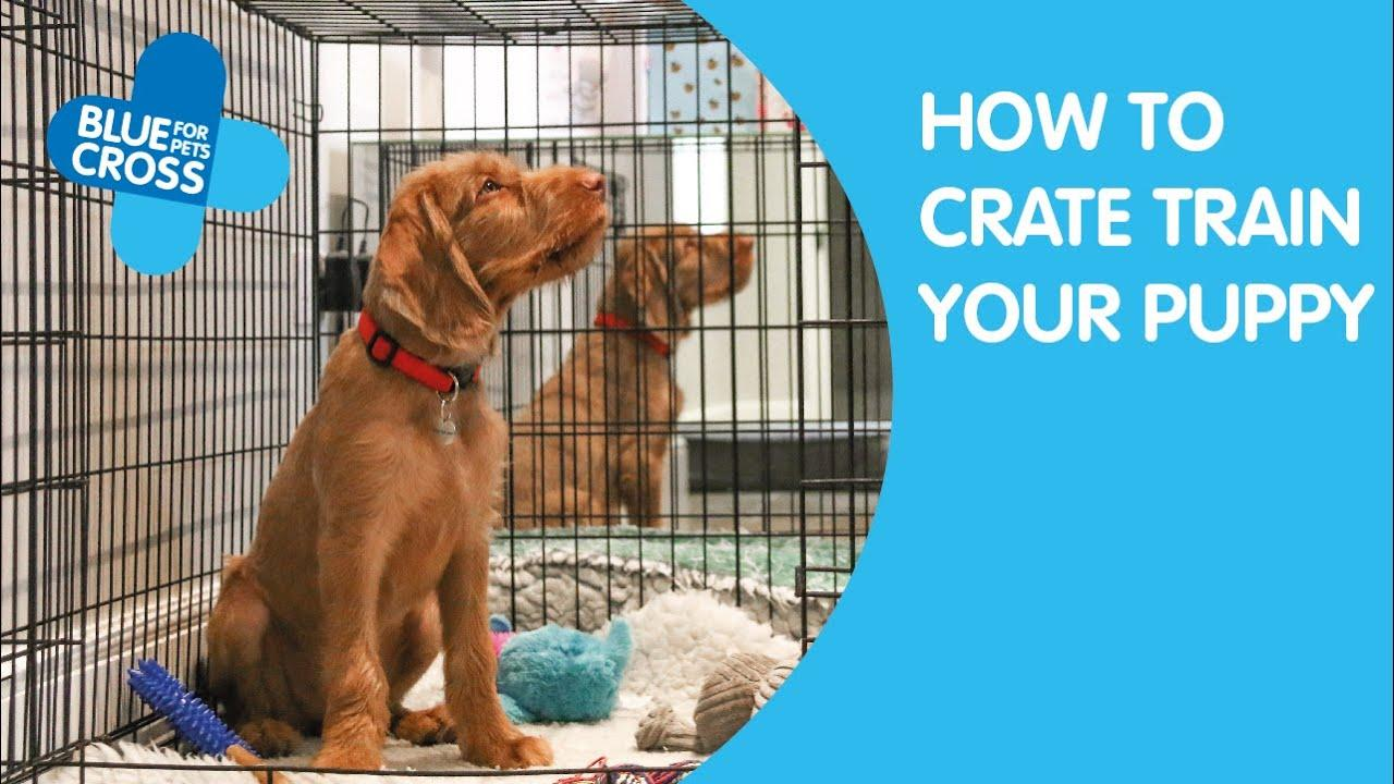 How To Crate Train Your Puppy Blue Cross