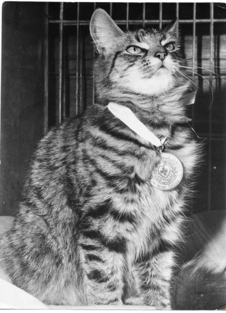 Black and white cat - Blue Cross Medal winner