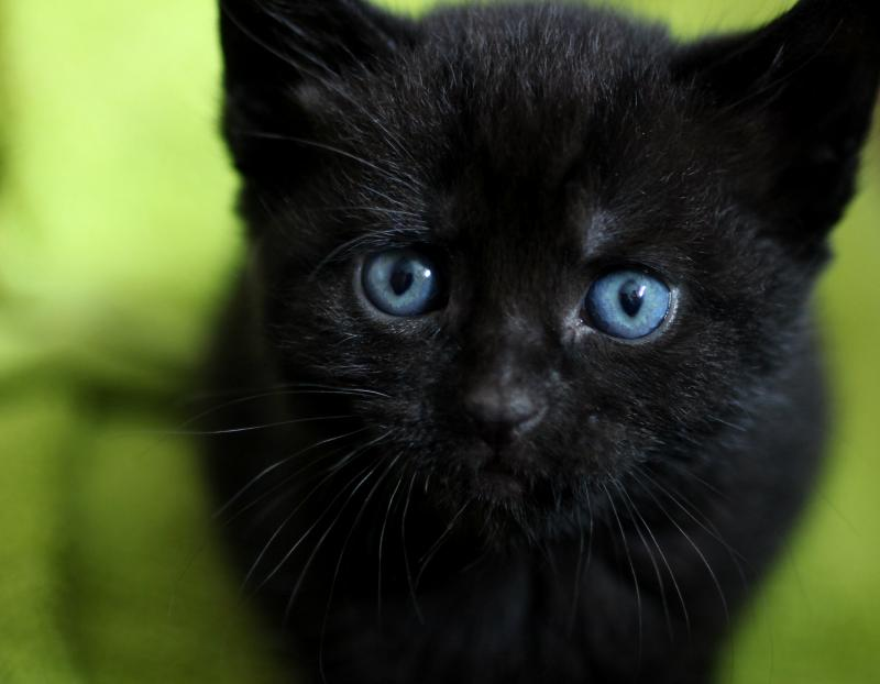 How Long Do Cats Live Cat Life Stages Blue Cross