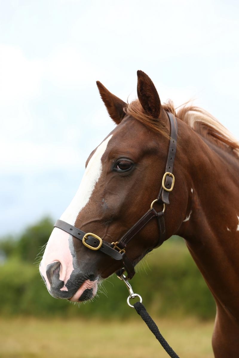 Close up of horse looking to the side