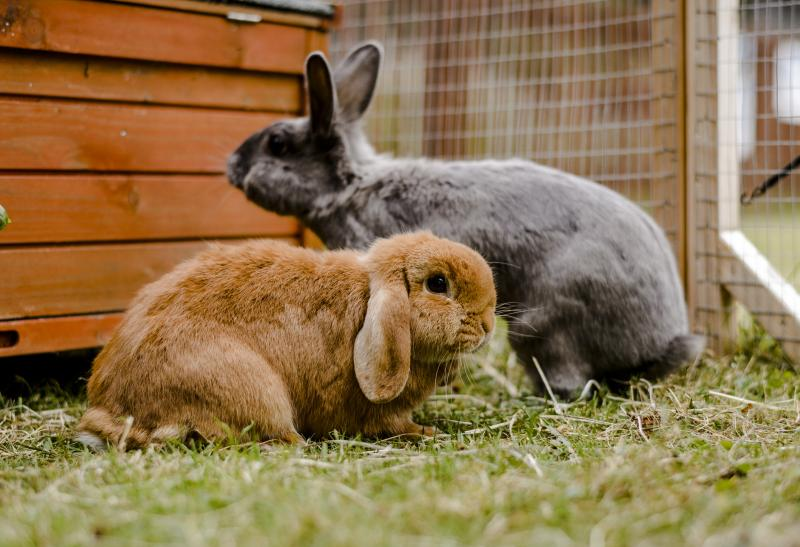 15 Rabbit Facts You Probably Didn T Know Blue Cross