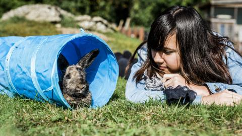 A young girl looks at a rabbit in a blue tunnel
