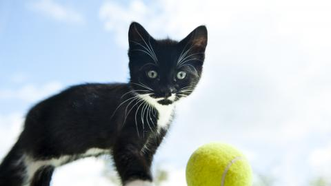 Kitten Hugo at Lewknor adoption centre
