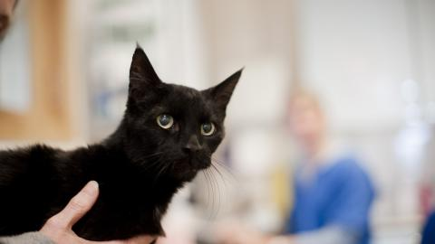 Caring For Your Sick Cat Blue Cross