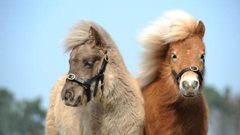 Foals Tinker and Peanut B at Rolleston rehoming centre