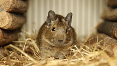 Pet Rabbit Care Tips