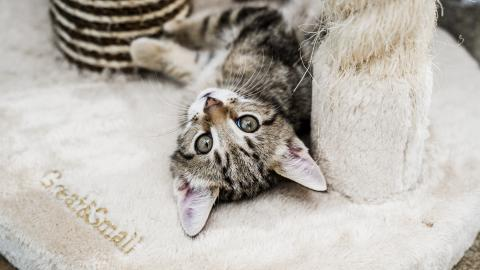 How to stop cats scratching or clawing in the house