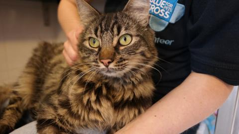 Cat Russell at Southampton rehoming centre