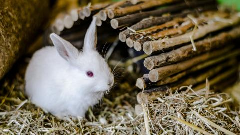 Rabbit sitting in straw ready for winter