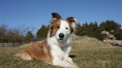 Buddy, a 4-year-old collie who was adopted from The Blue Cross by Aileen Holloway