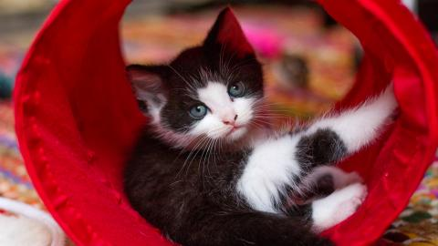 Kitten in a red tunnel
