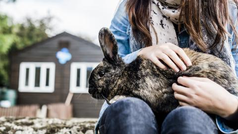 a rabbit sits on the lap of a person for a fuss