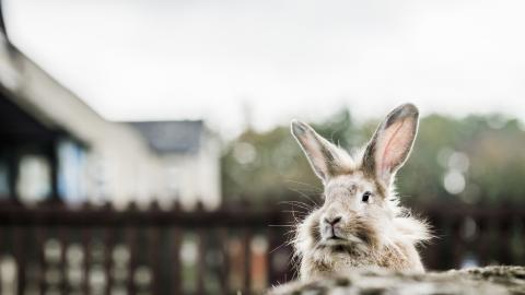 a rabbit looks very grand