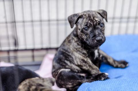 Canine Distemper | Treating Distemper in Dogs | Blue Cross